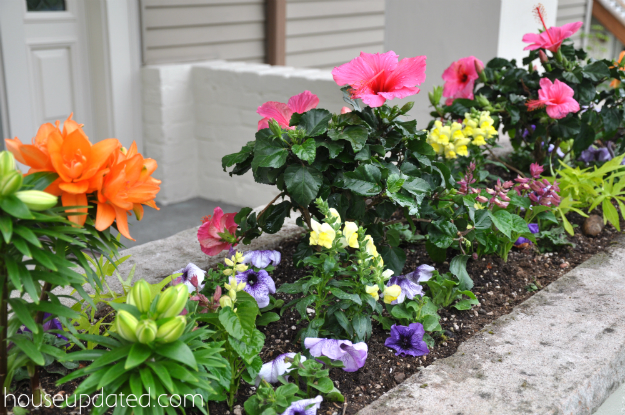 how to plant a planter box1