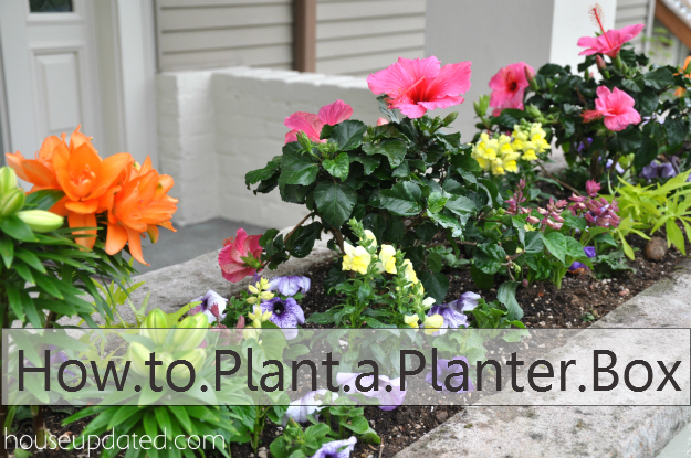 How to Plant a Planter Box with Flowers and Other Plants