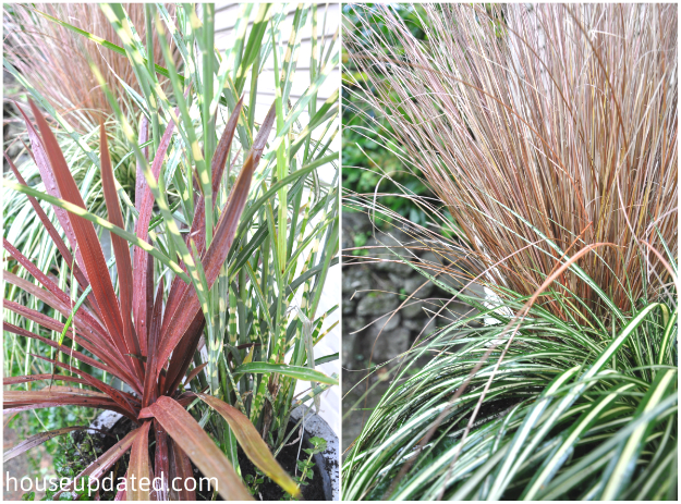 fall grasses in planters