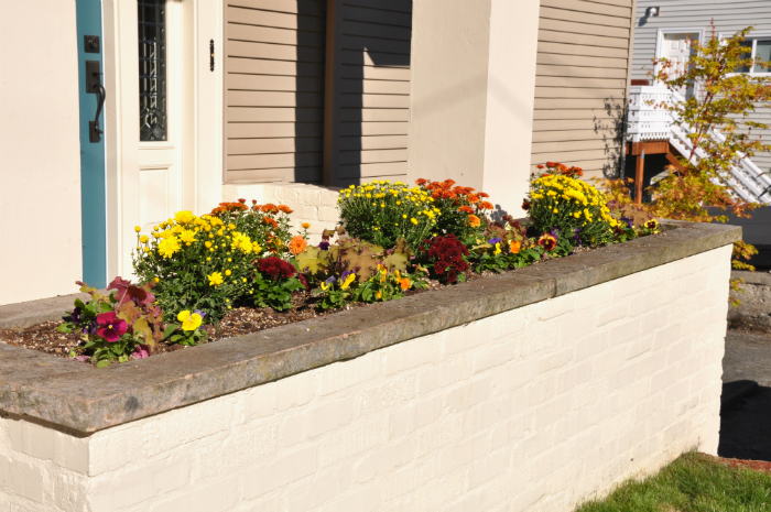 fall plantings with mums, pansies, and leafy plants