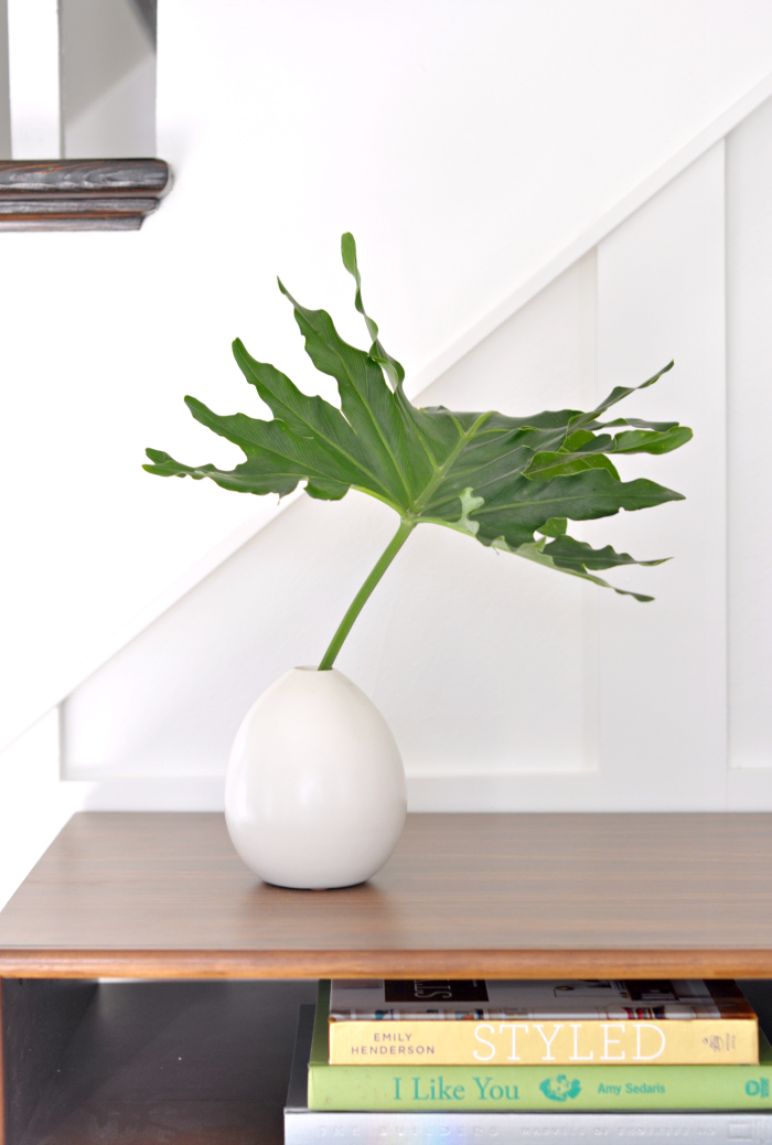 philodendron leaf in vase